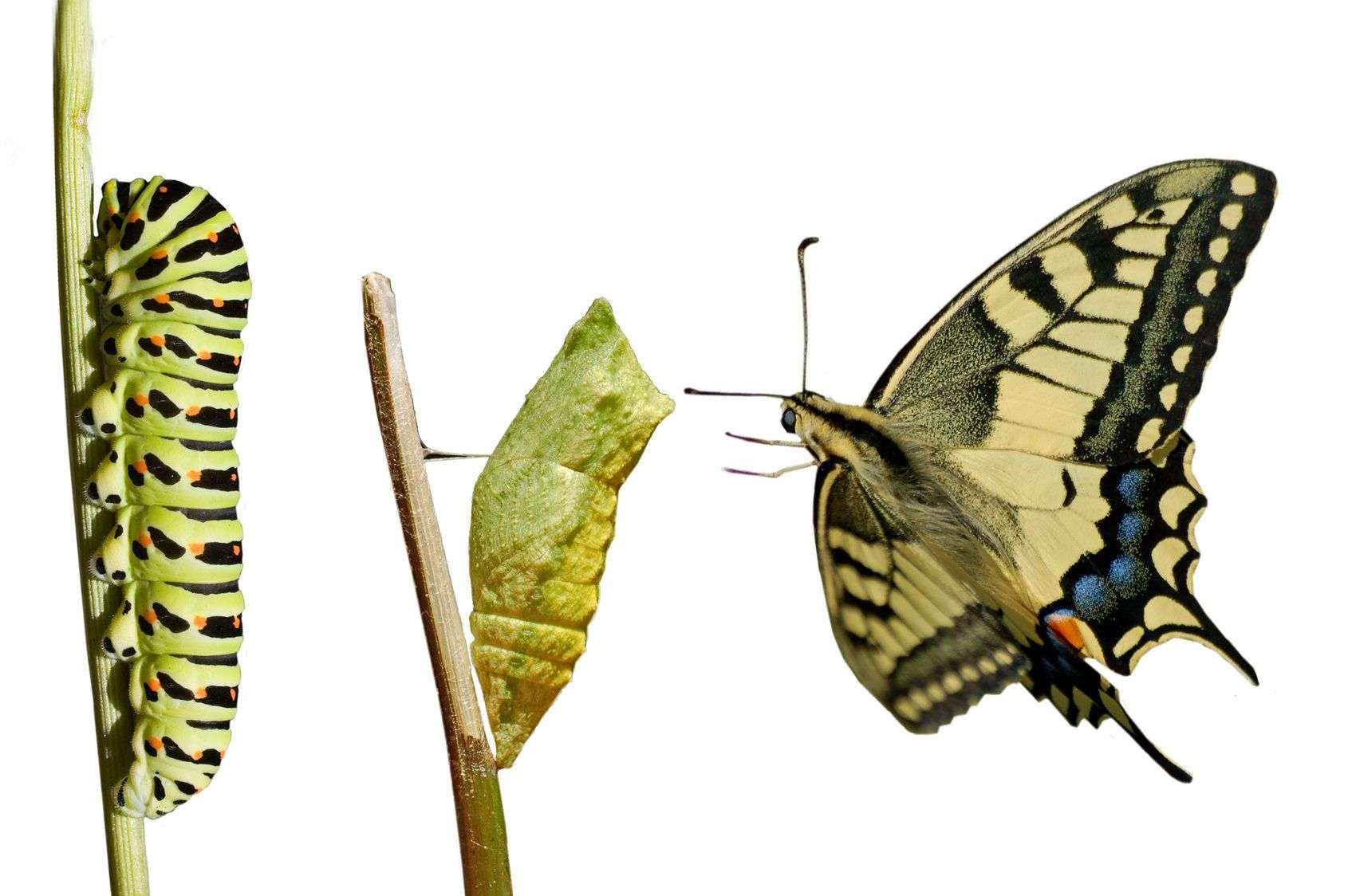 Δυσκολίες προσαρμογής και αντιμετώπιση αλλαγών
