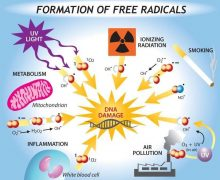 Τι είναι οι ελεύθερες ρίζες και πως μας επηρεάζουν;