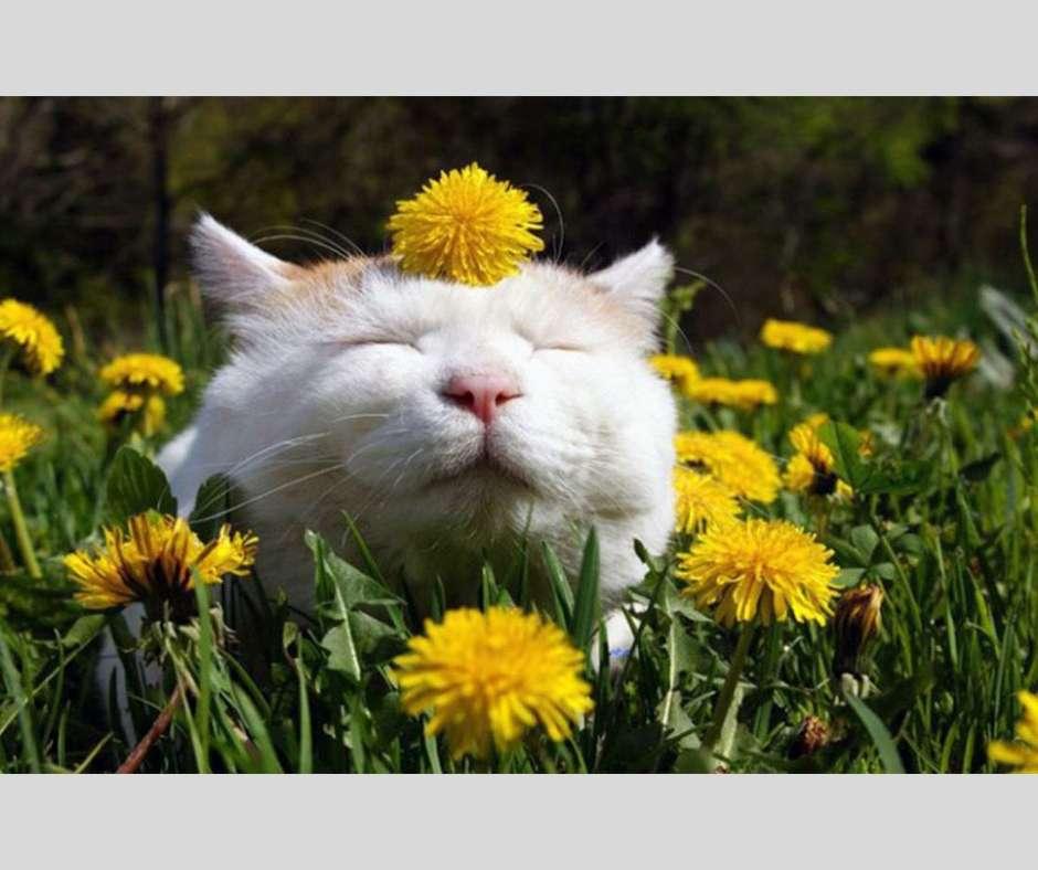 Η Ευδαιμονία το κλειδί της ευτυχίας σύμφωνα με τον Carl Jung